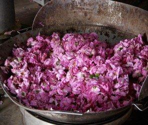 【伊斯帕爾塔】我的婚禮也要用玫瑰花:伊斯帕爾塔(Isparta)