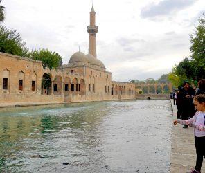【烏爾法】傳說中的先知守護故事:聖魚池(Balıklı Göl)